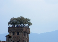 A famous tower in Lucca with trees on top