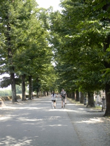 trees on the city wall of Lucca